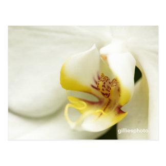 Foto do close up de um orchid. cartao postal