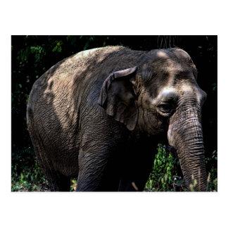 Foto do elefante cartão postal
