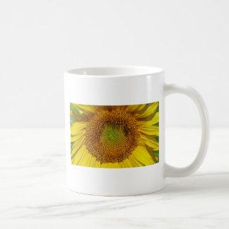 Foto do girassol caneca de café