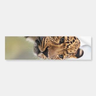 Foto do leopardo adesivo para carro