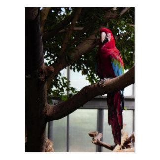 Foto do papagaio cartão postal