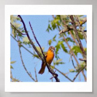 Foto do pássaro poster