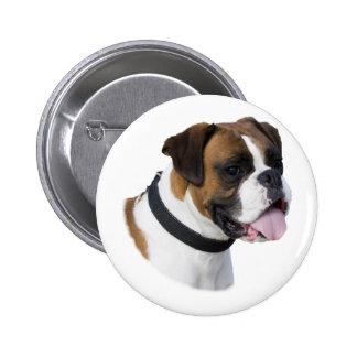 Foto do retrato do cão do pugilista da jovem corça boton