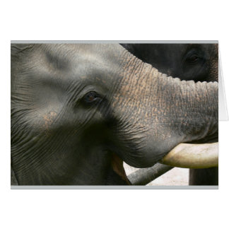 Foto do sorriso do elefante em Tailândia Cartão Comemorativo