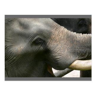 Foto do sorriso do elefante em Tailândia Cartão Postal