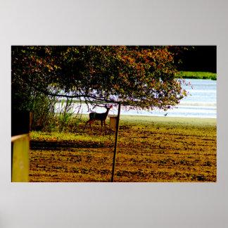 Foto dos cervos pôster