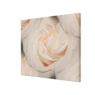 Foto elegante romântica da colagem dos rosas branc impressão de canvas esticada