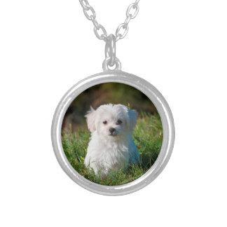 Foto feita sob encomenda do cão de estimação colar banhado a prata