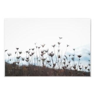 Foto Nascer dos Wildflowers outra vez