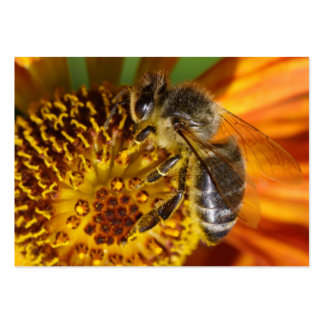 Foto ocidental do macro da abelha do mel cartão de visita grande
