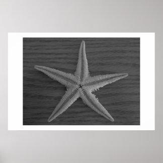 Foto preto e branco da estrela do mar pôsteres