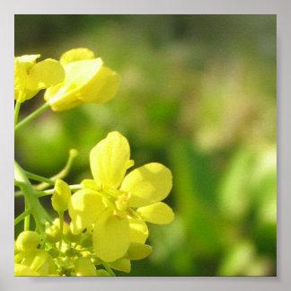 Fotografia amarela do macro das flores poster