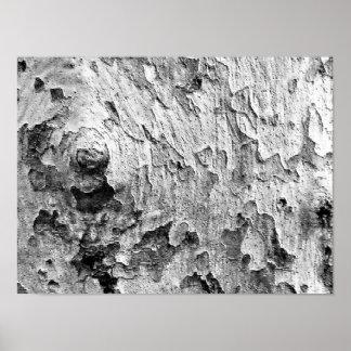 Fotografia bonita do latido de árvore poster