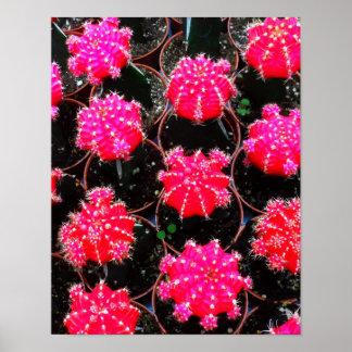 Fotografia cor-de-rosa da planta do cacto da flor posteres