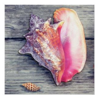 Fotografia cor-de-rosa do Seashell de Junonia do Poster Perfeito