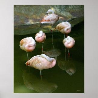Fotografia cor-de-rosa elegante dos flamingos