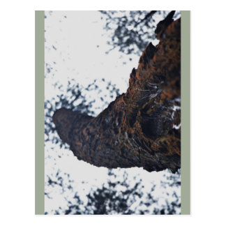 Fotografia da árvore cartão postal