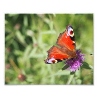 Fotografia da borboleta
