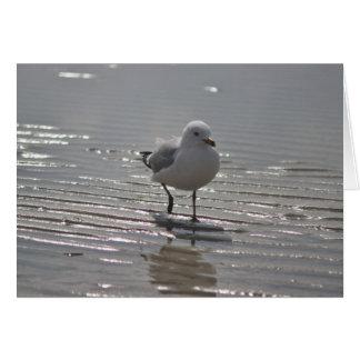 Fotografia da gaivota cartão comemorativo