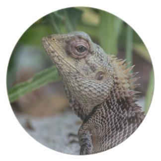 Fotografia da natureza do réptil do lagarto louças de jantar
