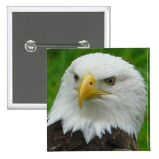 Fotografia de Eagle - águia americana norte-americ Pins