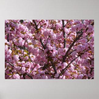 Fotografia de florescência cor-de-rosa do poster