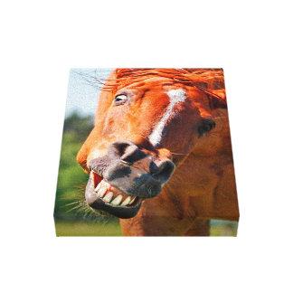Fotografia de riso do cavalo engraçado impressão em canvas