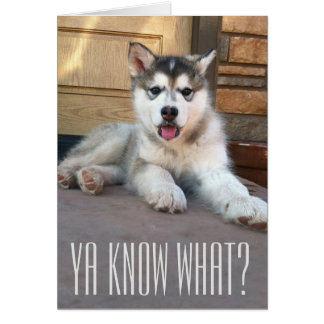 Fotografia do filhote de cachorro do Malamute do Cartão Comemorativo