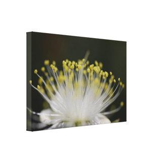 fotografia do micro da flor das belas artes impressão de canvas envolvida