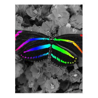Fotografia do pop da cor da borboleta do arco-íris cartão postal