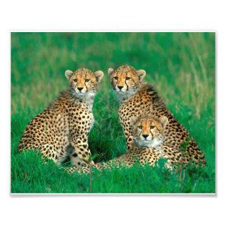 Fotografia dos animais selvagens