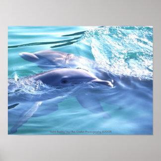Fotografia dos golfinhos posteres