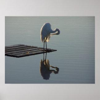 Fotografia dos pantanais dos animais dos animais poster