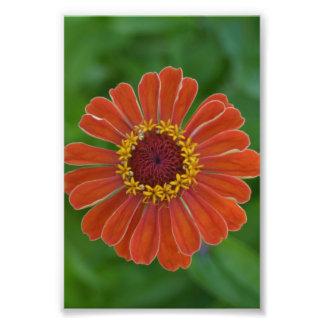 Fotografia floral da flor alaranjada da flor de Zi