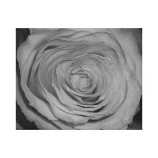 Fotografia preto e branco do rosa impressão em tela