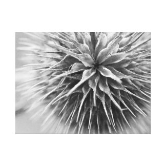Fotografia preto e branco floral impressão em tela