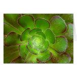 Fotografia verde brilhante do macro da planta do s cartão comemorativo