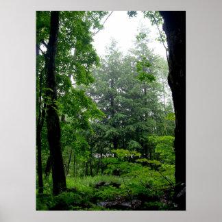 Fotografia verde do verão da floresta poster