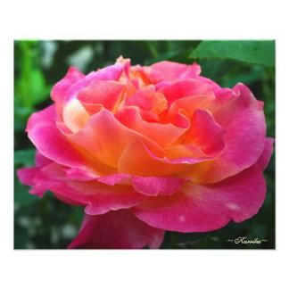 Fotografia vibrante do rosa do rosa por Karrilee