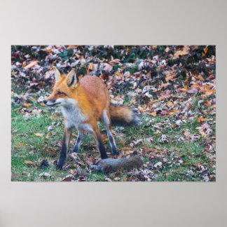 Fox e seu matar pôster
