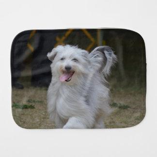 Fralda De Boca Sheepdog doce