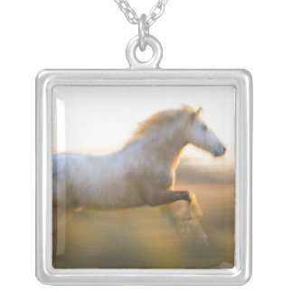 France, Provence. Corredor branco do cavalo de Colar Banhado A Prata