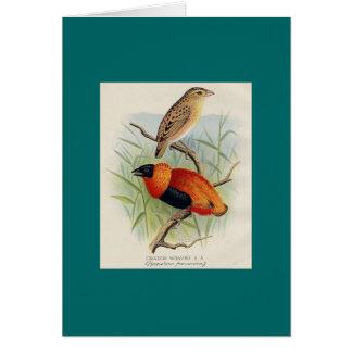 Frohawk - tecelão alaranjado cartão comemorativo