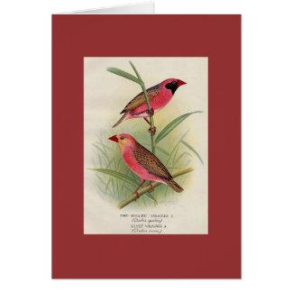 Frohawk - tecelão Vermelho-Faturado & tecelão de Cartão Comemorativo
