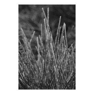 Frostgrass Pôster