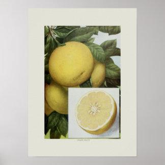 Fruta da uva posters