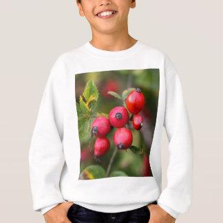 Frutas vermelhas do rosa de cão agasalho