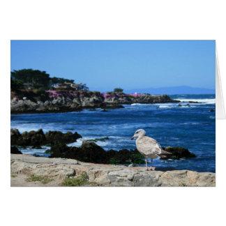 Gaivota no litoral pacífico, cartão de nota vazio