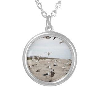 Gaivotas que voam, estando e comendo na praia colar banhado a prata