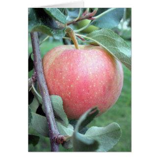 Gala real Apple Cartão